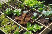 овощной сад — Стоковое фото