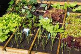 野菜の庭 — ストック写真
