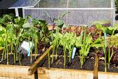Sebze bahçesi — Stok fotoğraf