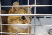 Cat in cage — Stock Photo