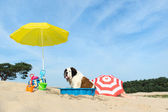 Cooling down for dog at the beach — Stock Photo