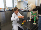 White dog with bandage at the veterinarian — Stock Photo