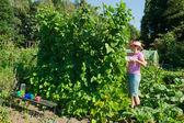 Woman in vegetable garden — ストック写真