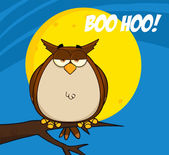 Owl On Tree In The Night With Text — Stock Photo