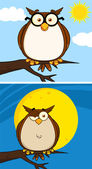 Wise Owl Cartoon Character. Collection Set — Stock Photo