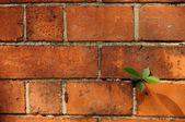 植物对此砖墙 — 图库照片