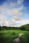 Wetland Sky — Stock Photo