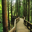 Stock Photo: Path in Forest
