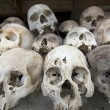图库照片: Skulls in killing field