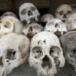 Stock Photo: Skulls in killing field
