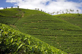 Шри-Ланка чайный сад гор в городе Нувара Элия — Стоковое фото