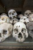 Skulls in killing field — Stock Photo