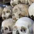 Стоковое фото: Skulls and bones in Killing field