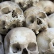 Skulls and bones in Killing field — Stock fotografie #15708725