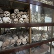 Skulls and bones in Killing field — Stock fotografie #15709315