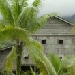 Tribal borneo houses — Stock Video