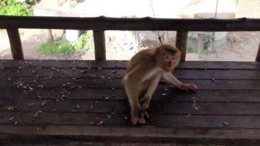 Funny monkey — Stock Video