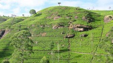 Sri Lanka tea garden mountains in nuwara eliya — Stock Video