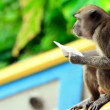 Stock Video: Monkeys in batu cave temple in malaysia