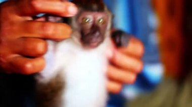 Man holding small monkey — Vídeo de stock