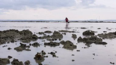 Gathering oyster during low tide — Stock Video