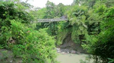 Wooden bridge in jungle — Stock Video