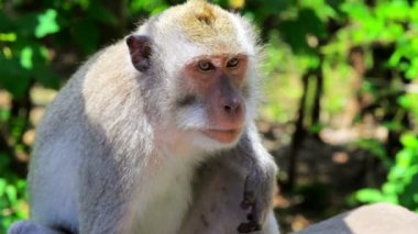 Monkey thinking — Stockvideo