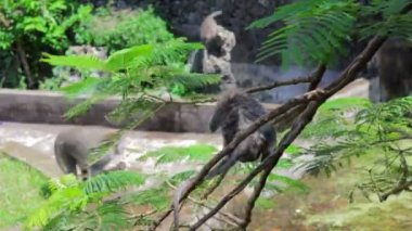 Monkeys in uluwatu temple, bali — Stockvideo