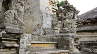 Monkeys in uluwatu temple, bali — Stock Video