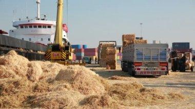 Balles de foin, chargés sur des camions, port — Vidéo