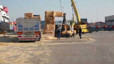Balas de heno cargan en camiones, puerto — Vídeo de stock