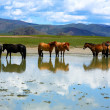 Stock Photo: Mongolihorses in vast grassland, mongolia