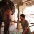 Tourist stroking elephant — Stockvideo #38909883