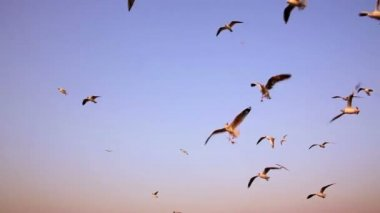 Seagulls flying — Stock Video