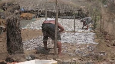 People drying fish — Stock Video