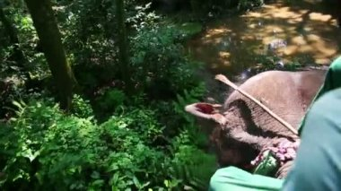 Riding on elephant — Stock Video