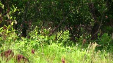 羚羊群 — 图库视频影像