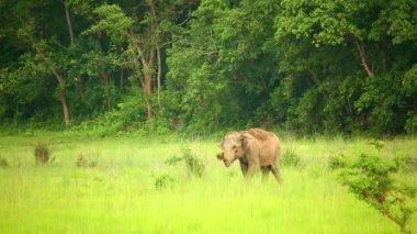 大象 — 图库视频影像