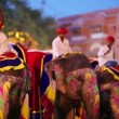 Traditionally painted elephants — Stock Video #39236007