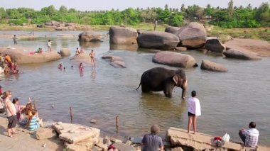 People and elephant wading in river — Stock Video