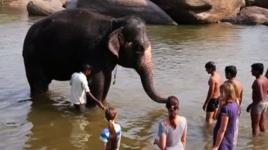 Man washing his elephant in river — Vídeo Stock