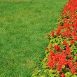 Green grass and red flowers — Stock Photo