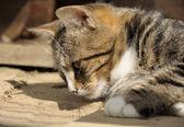 Kat tot op de vloer woden — Stockfoto