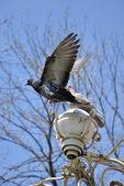 Two doves on lantern — Stock Photo