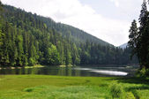 Green pine forest above smooth surface of lake Synevyr — Stock Photo