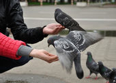 City pigeon sitting on the woman hand — Stock Photo