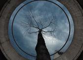 Tree from concrete ring around — Stock Photo
