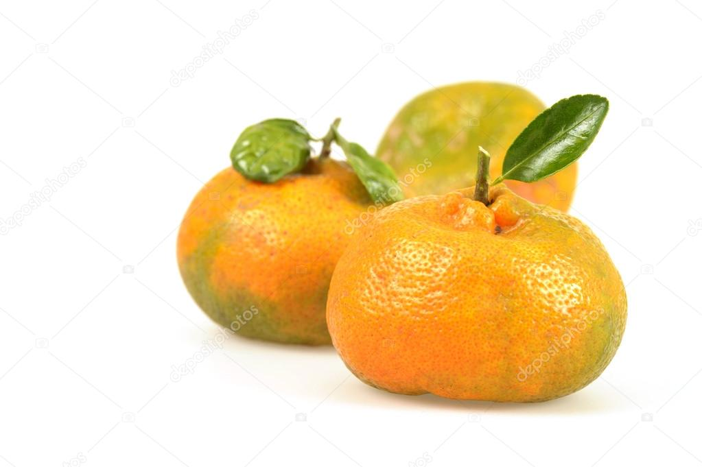 Naturally, not chemically ripened tangerines that were freshly picked.  Stock Photo #12982581