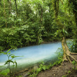 Stock Photo: Rio Celeste Waters