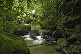 Costa Rica Rainforest — Stock Photo